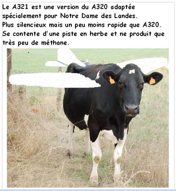 Acipa cow plane