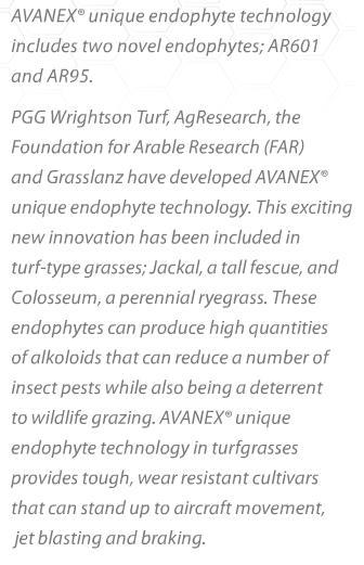 Avanex grass details