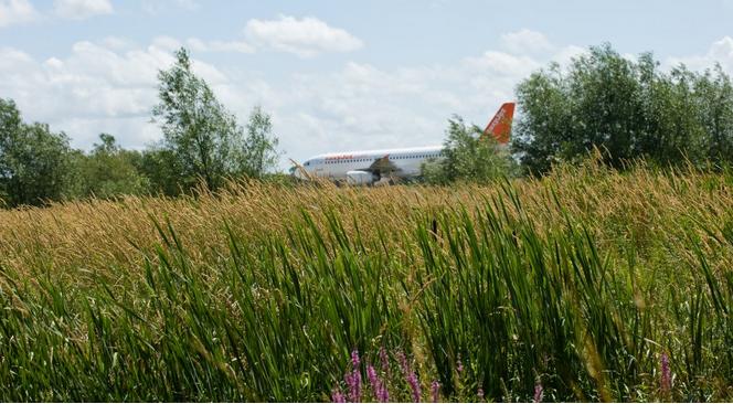 Gatwick plane hiding in the grass